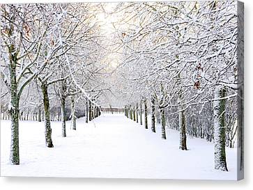 Pathway In Snow Canvas Print by Marius Sipa
