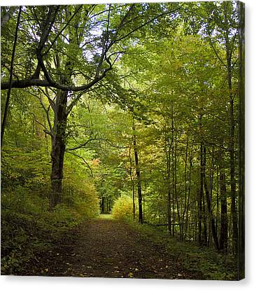 Pathway Lined By Trees Canvas Print by Wilma  Birdwell