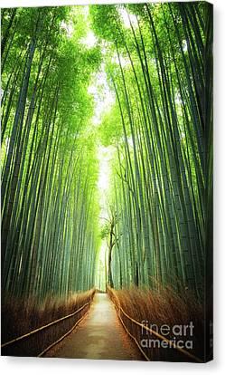 Pathway Through The Bamboo Grove Kyoto Canvas Print