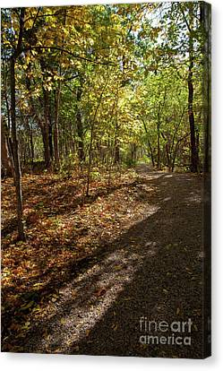 Canvas Print featuring the photograph Pathways In Fall by Iris Greenwell
