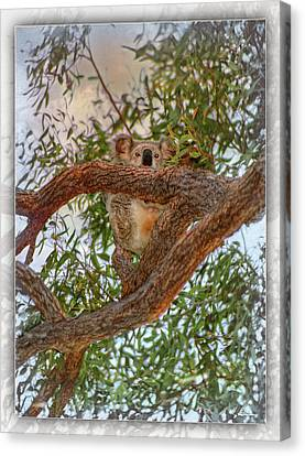 Canvas Print featuring the photograph Patience Brings Koalas by Hanny Heim