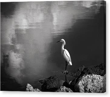 Chrystal Canvas Print - Patience In Black And White by Chrystal Mimbs