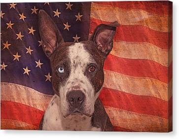 Patriotic Pit Bull  Canvas Print