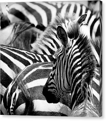 Exoticism Canvas Print - Pattern Of Zebras by Konstantin Kalishko