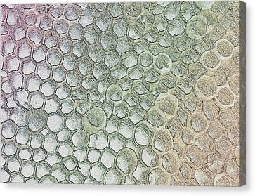 Pattern Or Abstract  Canvas Print