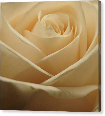 Patterns In Rose Petals  Off White Canvas Print