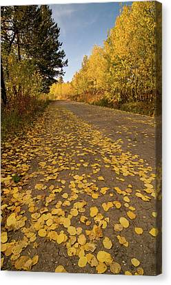 Canvas Print featuring the photograph Paved In Gold by Steve Stuller