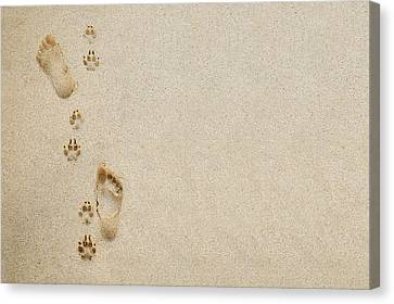 Paw And Footprint 1 Canvas Print by Brandon Tabiolo - Printscapes
