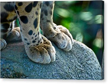 Paws For Effect Canvas Print by Gene Sizemore
