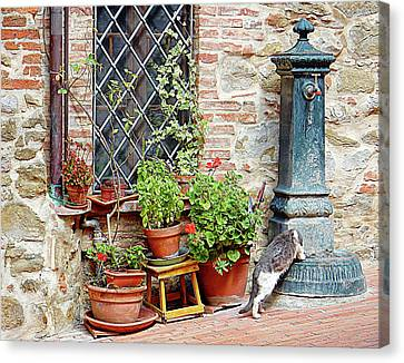 Pawse For A Drink In Paciano Canvas Print by Dorothy Berry-Lound