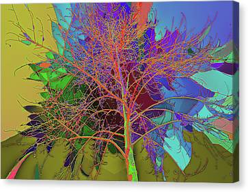 P C C Elm In The Wait Of Bloom Canvas Print by Kenneth James