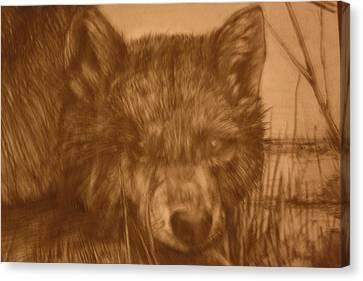 Pd9-10 Canvas Print by Shannon Rains