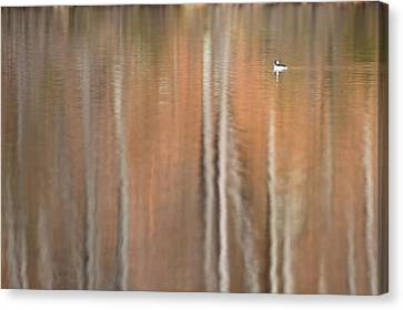 Peace And Tranquility Canvas Print by Bill Wakeley