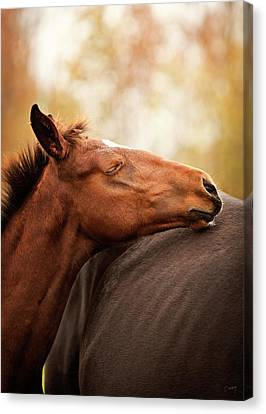 Peace Canvas Print by Christina Conway