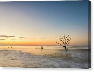 Peace In Botany Canvas Print by Jon Glaser