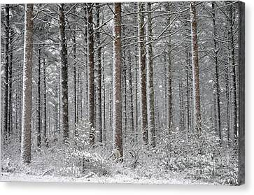 Peace In The Woods Canvas Print