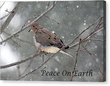 Peace On Earth Dove Canvas Print by Debbie Oppermann