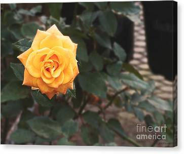 Peace Rose Porch Canvas Print by Sabrina Wheeler