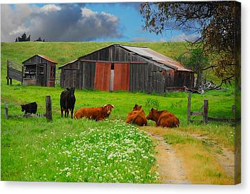 Peaceful Cows Canvas Print by Harry Spitz
