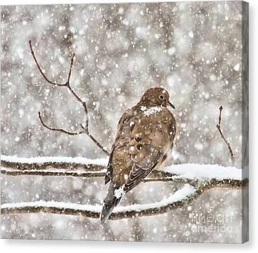Canvas Print featuring the photograph Peaceful by Debbie Stahre