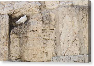 Peaceful Dove Canvas Print by Julie Alison