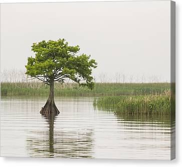 Canvas Print featuring the photograph Peaceful Feeling by Julie Andel