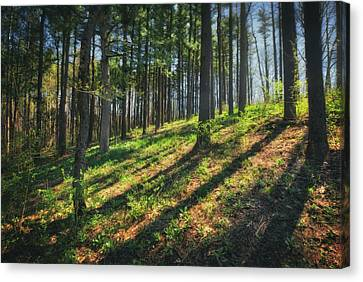 Peaceful Forest 4 - Spring At Retzer Nature Center Canvas Print by Jennifer Rondinelli Reilly - Fine Art Photography
