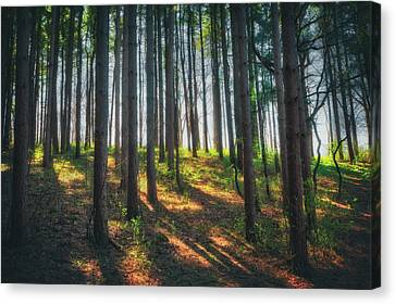 Peaceful Forest - Spring At Retzer Nature Center Canvas Print by Jennifer Rondinelli Reilly - Fine Art Photography