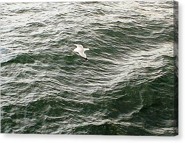 Canvas Print featuring the photograph Peaceful Gliding At Sea by Piety Dsilva