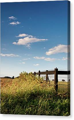 Peaceful Grazing Canvas Print by David Sutton