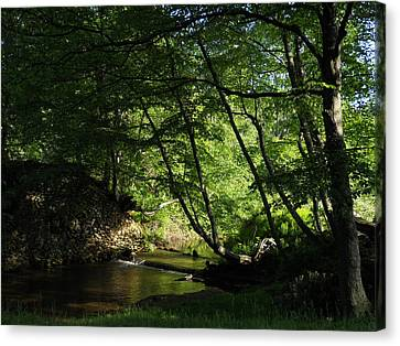 Canvas Print featuring the photograph Peaceful Mountain Stream by Diannah Lynch