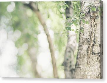 Peaceful Nature Canvas Print