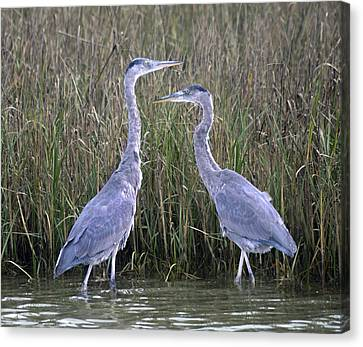 Peaceful Pair Canvas Print by Betsy Knapp
