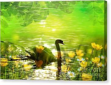 Peaceful Swan In Lake With Flowers Canvas Print