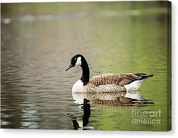 Peaceful Tranquility Canvas Print by Scott Pellegrin