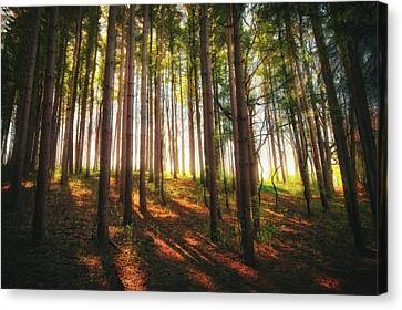 Peaceful Wisconsin Forest 2 - Spring At Retzer Nature Center Canvas Print by Jennifer Rondinelli Reilly - Fine Art Photography