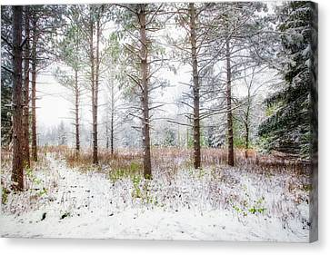 Peaceful Woods - Winter At Retzer Nature Center  Canvas Print