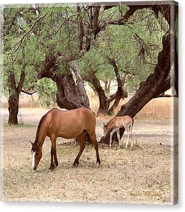 Peacefully Grazing Canvas Print