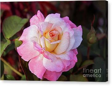 Peach And White Rose Canvas Print