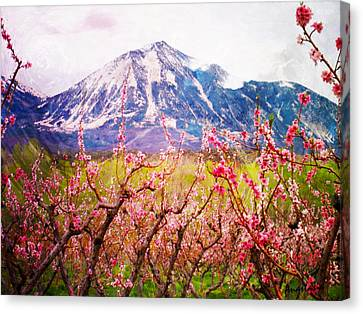 Peach Blossoms And Mount Lamborn II Canvas Print
