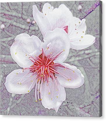 Peach Blossoms Canvas Print by Jane Schnetlage