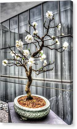 Peach Bonsai Tree Canvas Print