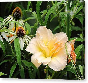 Peach Day Lily Canvas Print