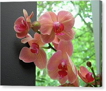 Canvas Print featuring the photograph Peach Orchids by Manuela Constantin