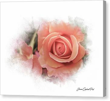 Peach Perfection Canvas Print