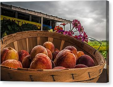 Farm Stand Canvas Print - Peaches by Maria Coulson