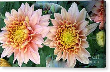 Peachy Chrysanthemums Canvas Print by Jeannie Rhode