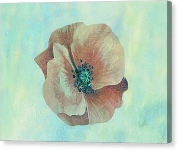 Peachy Keen Poppy Watercolor Canvas Print by Sandi OReilly