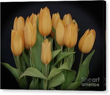Peachy Keen Tulips Canvas Print