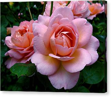Peachy Pink Canvas Print by Rona Black